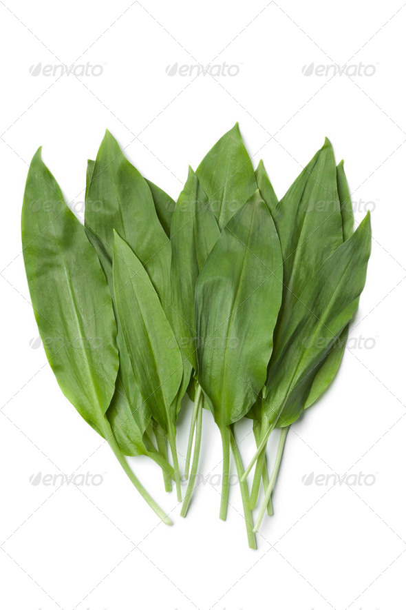 Fresh Ramson leaves - Stock Photo - Images