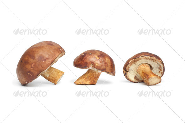 Fresh Bay Bolete mushrooms - Stock Photo - Images