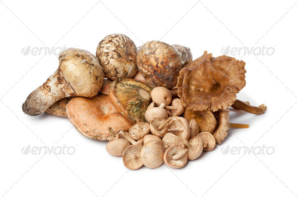 Different autumn mushrooms - Stock Photo - Images