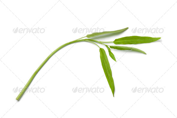 Fresh Water Spinach twig - Stock Photo - Images