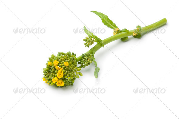 Fresh piece of broccolini - Stock Photo - Images
