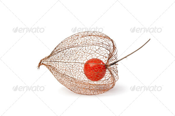 Physalis berry in Autumn - Stock Photo - Images