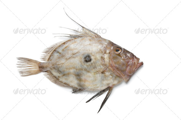 Fresh John Dory fish - Stock Photo - Images