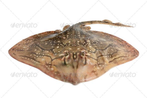 Fresh ray fish - Stock Photo - Images
