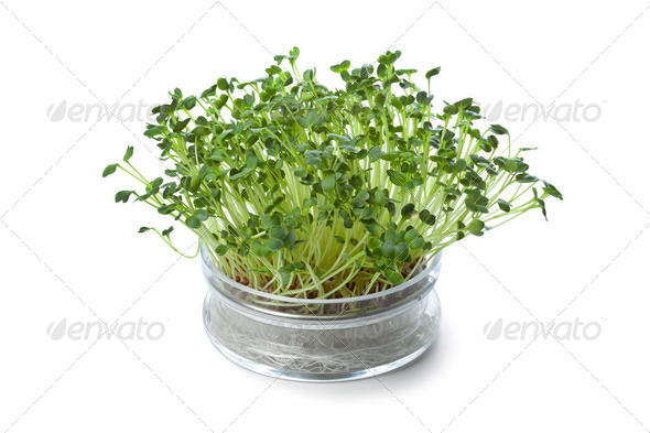Glass bowl with fresh radish sprouts - Stock Photo - Images