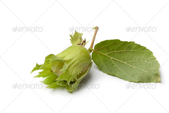 Fresh hazelnut and leaf - Stock Photo - Images