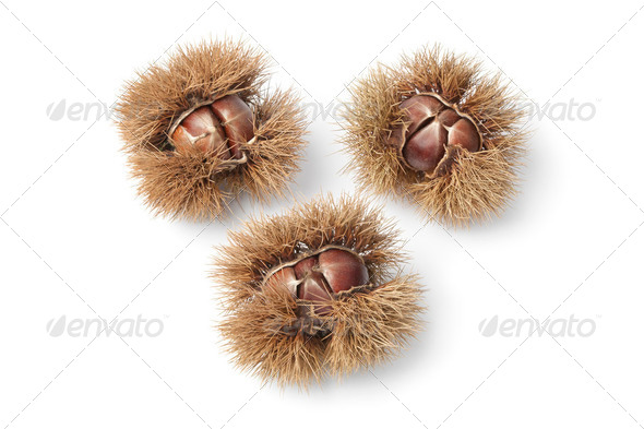 Sweet chestnuts - Stock Photo - Images