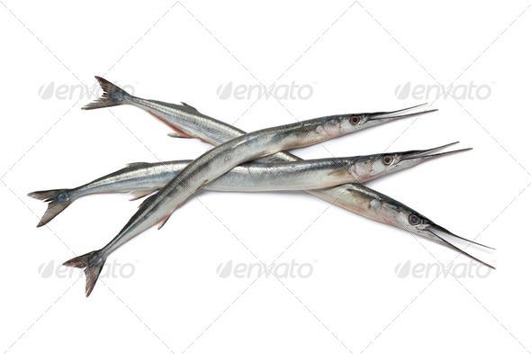 Fresh raw garfishes - Stock Photo - Images