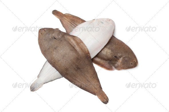 Fresh sole fishes - Stock Photo - Images