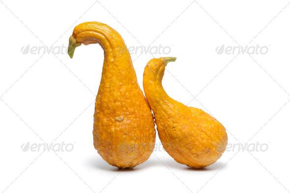 Yellow crookneck squashes - Stock Photo - Images