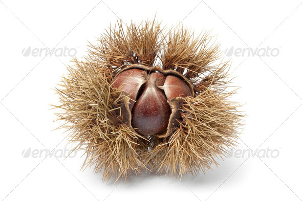 Sweet chestnut - Stock Photo - Images