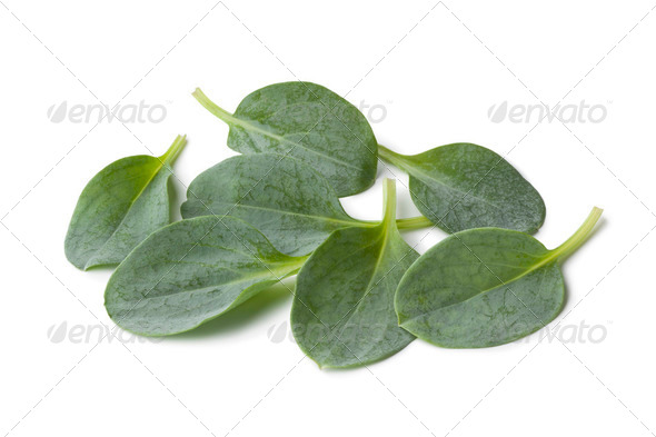 Fresh oysterleaves - Stock Photo - Images