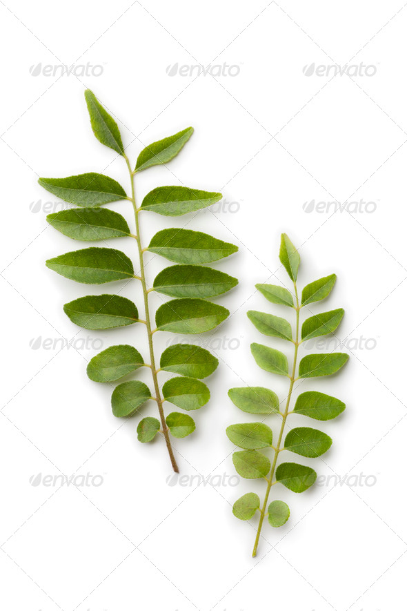 Fresh curry leaves - Stock Photo - Images