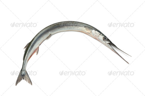 Fresh raw  sea needle - Stock Photo - Images