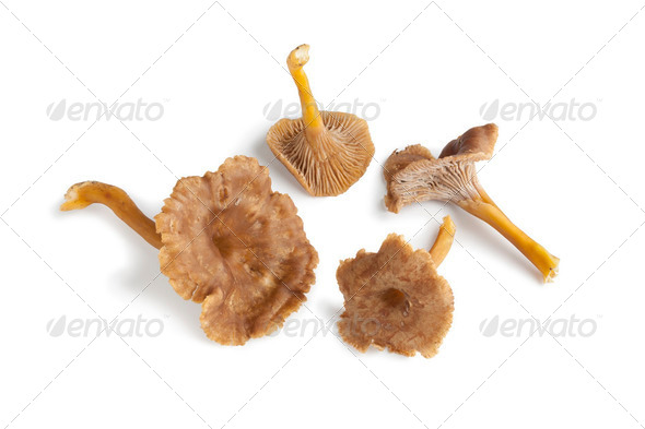 Chanterelle grise mushrooms - Stock Photo - Images