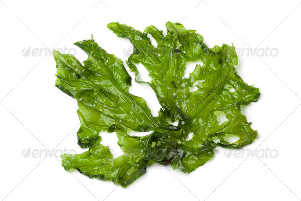 Leaf of Sea lettuce - Stock Photo - Images