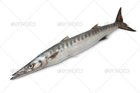 Whole single fresh Barracuda fish - Stock Photo - Images