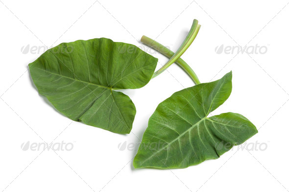 Fresh Taro leaves - Stock Photo - Images