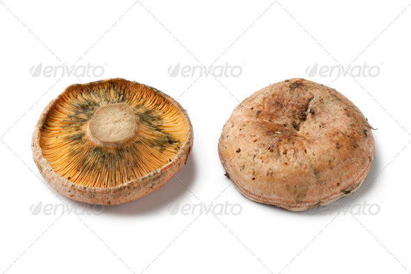 Milkcap mushrooms - Stock Photo - Images