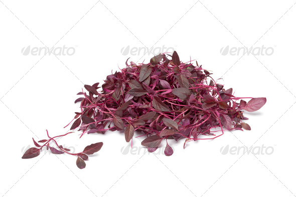 Red Amaranth sprouts - Stock Photo - Images