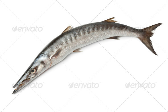 Whole single fresh Barracuda fish - Stock Photo - Images