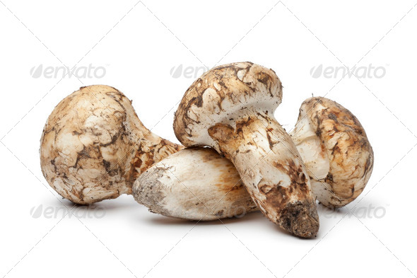 Matsutake mushrooms - Stock Photo - Images