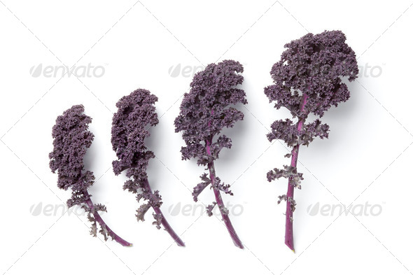 Leaves of red curly kale - Stock Photo - Images