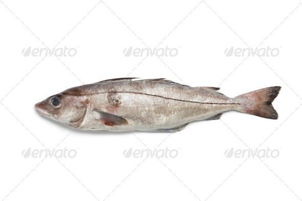 Fresh raw haddock - Stock Photo - Images