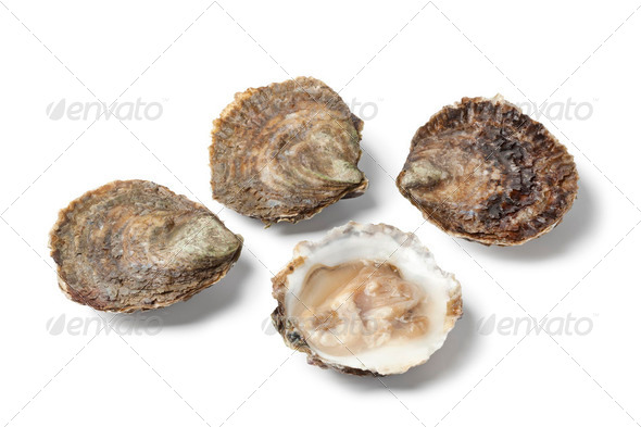 Open and closed European flat oysters - Stock Photo - Images