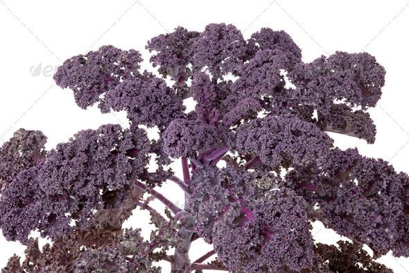 Red kale - Stock Photo - Images