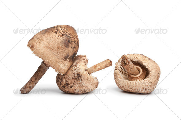 Parasol mushrooms - Stock Photo - Images