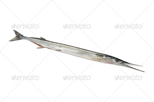 Whole fresh raw garfish - Stock Photo - Images