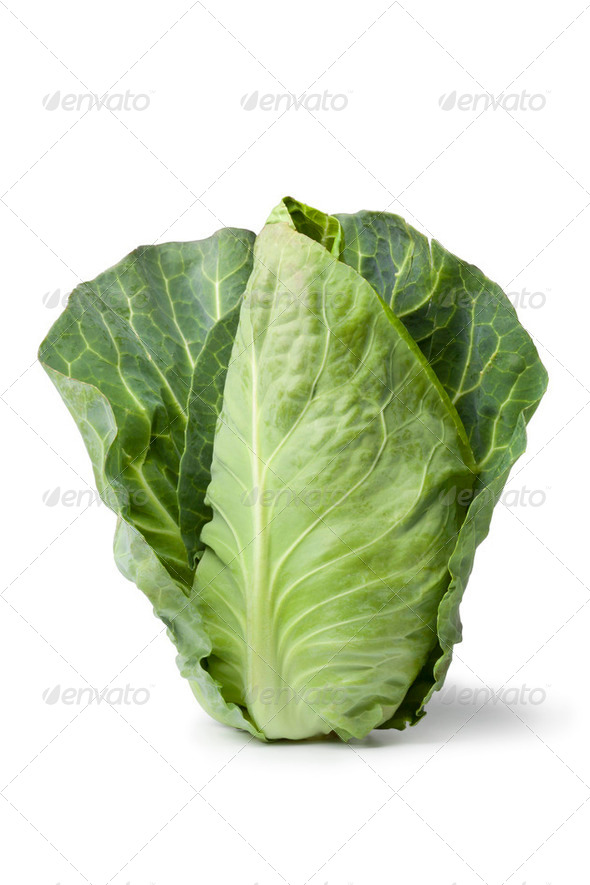Fresh organic pointed cabbage - Stock Photo - Images