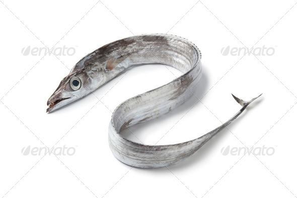 Whole single fresh ribbondfish - Stock Photo - Images