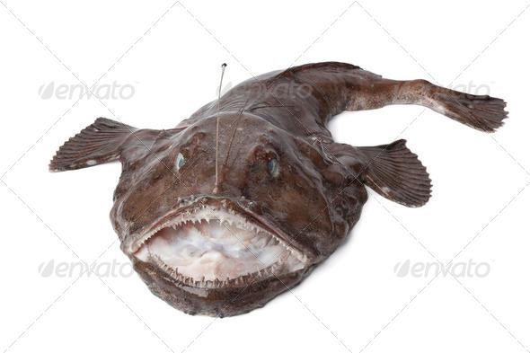 Whole fresh Monkfish - Stock Photo - Images