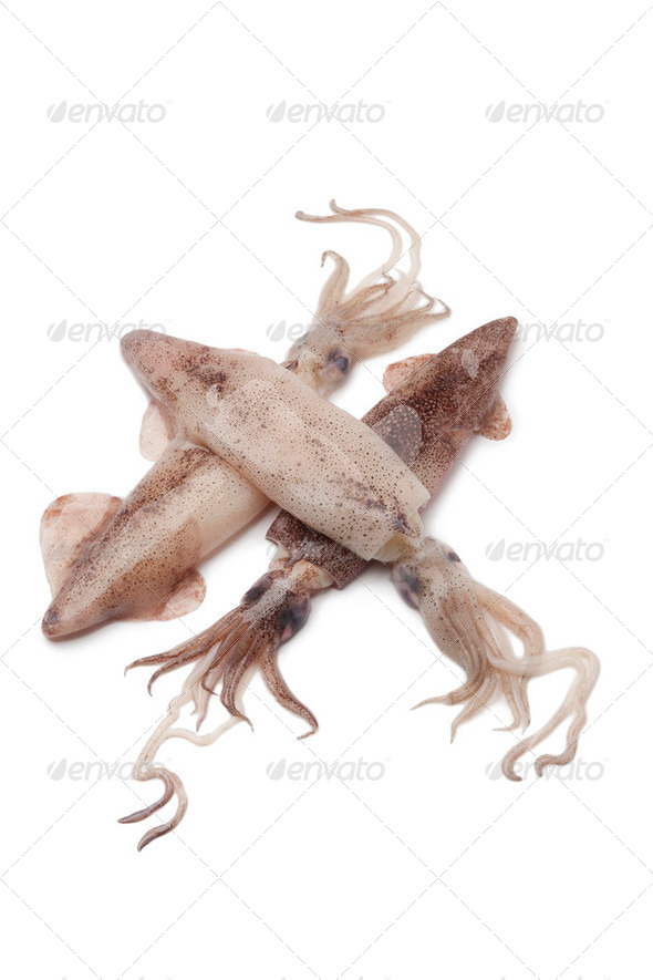 Fresh raw squid - Stock Photo - Images