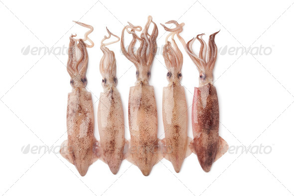Fresh raw calamari - Stock Photo - Images
