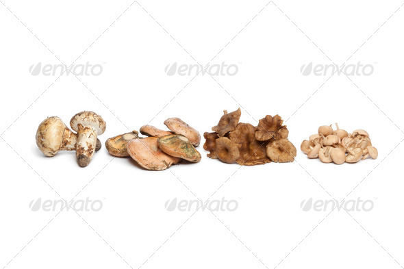 Different autumn mushrooms - Stock Photo - Images