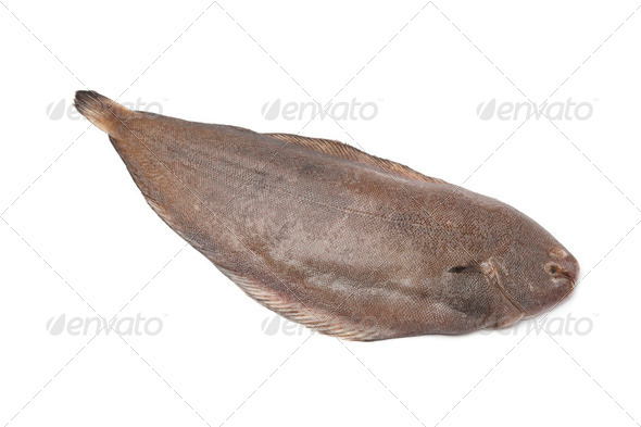 Whole single fresh sole fish - Stock Photo - Images