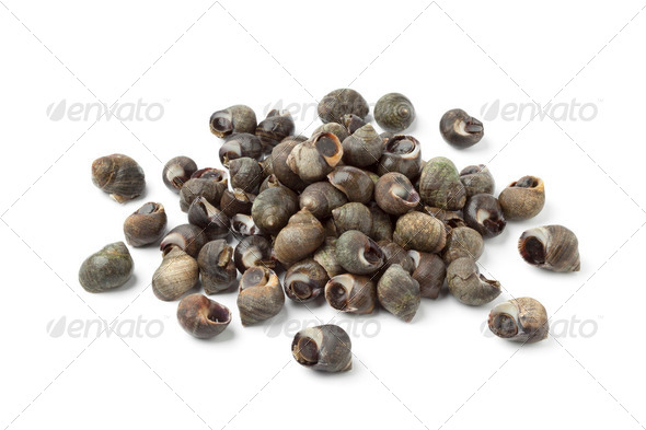 Fresh common periwinkles - Stock Photo - Images