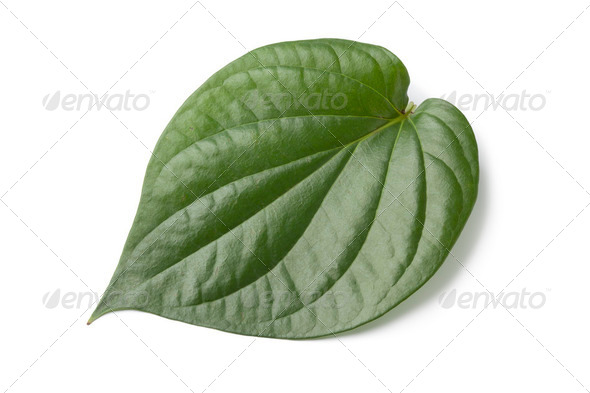Piper betle leaf - Stock Photo - Images