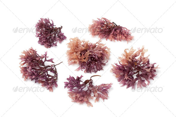 Star shaped moss seaweed - Stock Photo - Images