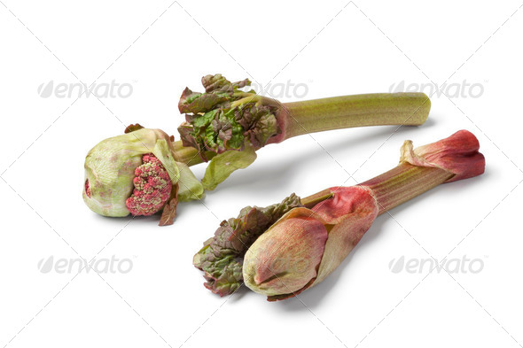 Fresh Rhubarb flowers - Stock Photo - Images