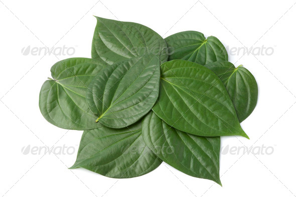 Piper betle leaves - Stock Photo - Images
