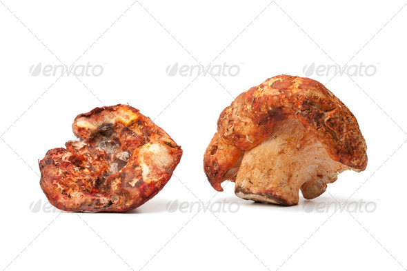 Lobster mushrooms - Stock Photo - Images