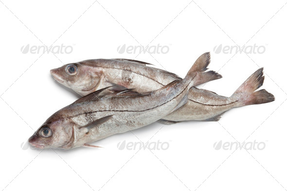Fresh raw haddock fished - Stock Photo - Images