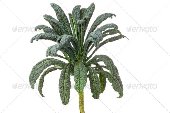 Cavolo nero cabbage - Stock Photo - Images