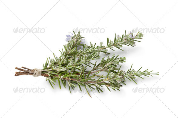 Bouquet of fresh blooming rosemary - Stock Photo - Images