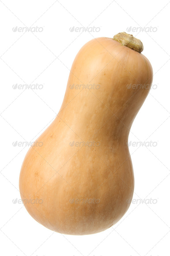 Butternut Pumpkin - Stock Photo - Images