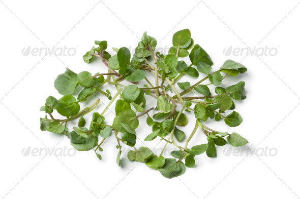 Fresh twigs of watercress - Stock Photo - Images